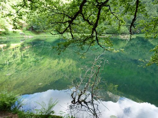 Bethmale Ariège : vers le monde végétal
