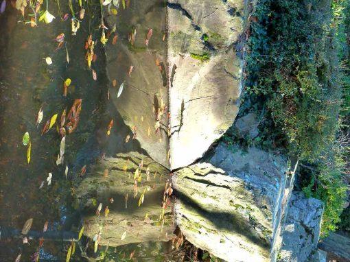 L'île de Versailles, portrait symbolique du jardin japonisant