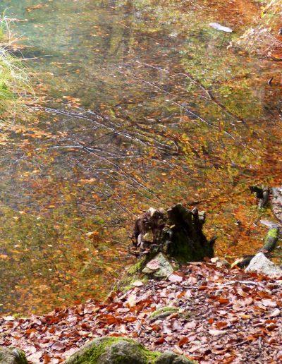 lac-automne
