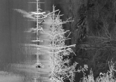 Reflet-élévation – 1 - digigraphie